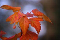 Verwekte Blätter