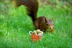 Ein Eichhörnchen nähert sich
