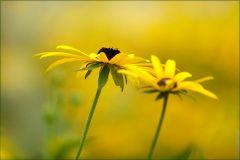 Blumen im September