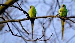 Zwei Papageien