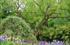 Junigrün