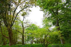 Bäume im Mai
