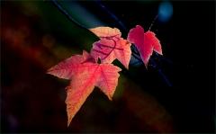 Blätter im November