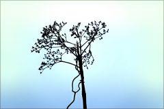 Vertrocknete Pflanze