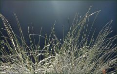Gräser mit Regentropfen