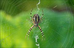 Nochmal die Spinne