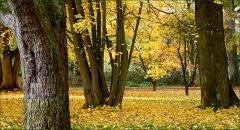 Novembergold