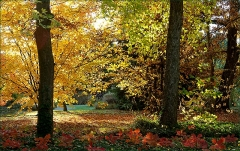 Herbstfarben im November