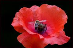 Eichhörnchen krazt sich