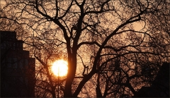 Sonnenaufgang im Januar