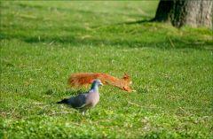 Taube und Eichhörnchen