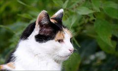Katzenprofil