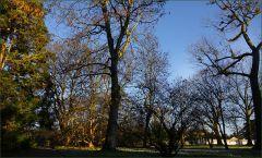 Bäume im Februar