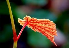 Zweig mit Blatt