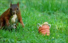 Das Eichhörnchen zieht sich zurück