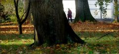 Wiese, Laub und alte Bäume