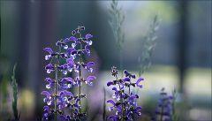 Wildbluen auf einer Waldlichtung