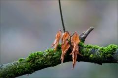 Verwelkte Blätter