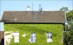 Hausfassade mit Efeu bewachsen