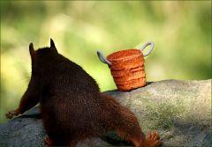 Dann kam ein anderes Eichhörnchen