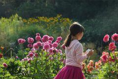 Ein Mädchen fotografiert die Dahlien
