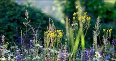 Wiese mit Wildblumen