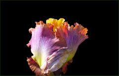 Dem Eichhörnchen habe ich eine Aprikose mitgebracht