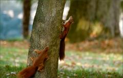 Zwei Eichhörnchen im Oktober