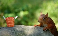 Ein anderes Eichhörnchen kommt