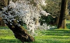 Baumblüten im März
