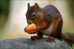 Foto aus meinem neuen  eBook: Das Eichhoernchen und die Aprikose