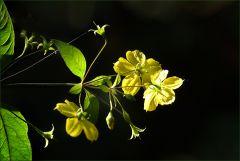 Kleine Blüten in der Morgensonne