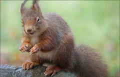 Das Eichhörnchen zwinkert mir zu