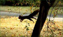 Sprung vom Baum