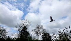 Wolken im Mai