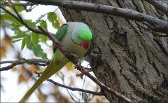 Papagei im November