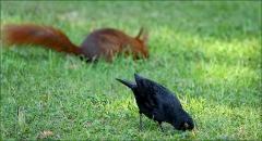 Amsel und Eichhörnchen