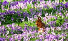 Eichhörnchen in der Frühlingswiese