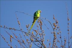 Papagei im März