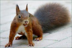 Das Eichhörnchen hat die Nuss für gut befunden