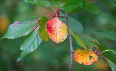 Verfärbte Blätter