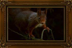 Eichhörnchen in antikem Rahmen