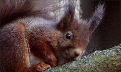 Eichhörnchen ruht sich aus