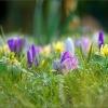 Frühlingswiese mit Regentropfen