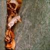 Laub in einer Baumspalte