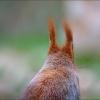 Eichhörnchen im Morgennebel