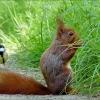 Eichhörnchen und eine Meise
