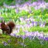 Eichhörnchen im März