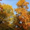 Bäume im Novembergold
