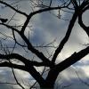 Baum im Januar